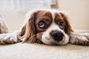 Tips on Cleaning Up After Pets
