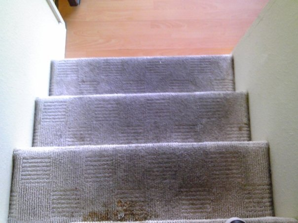 Methods and Benefits of Carpet Cleaning Dutch Village Carpet Company