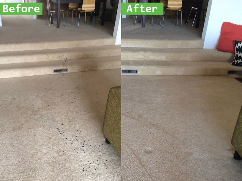 Best Tips on Cleaning Up After Pets in Dutch Village Ca Carpet Cleaners